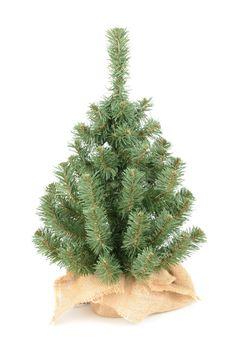 Choinka Świąteczna Juta Biss 50 cm