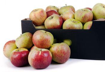 Jabłka 'Cortland' ważone